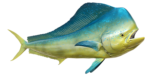 dolphin-new-500x250