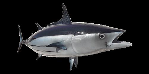 skipjack-tuna-500x250
