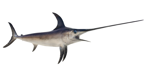 swordfish-500x250
